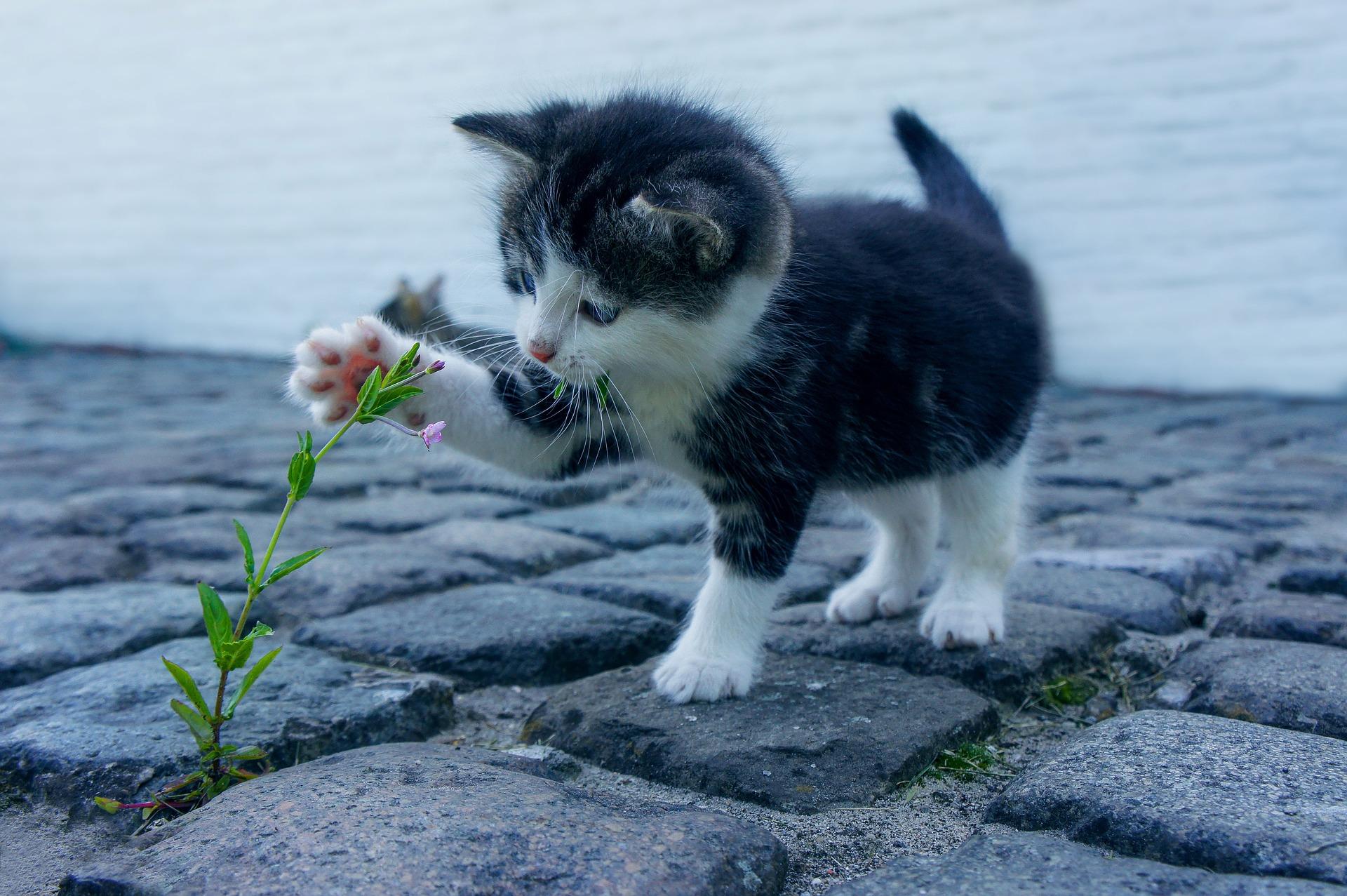 hình ảnh mèo dễ thương, ngộ nghĩnh 01