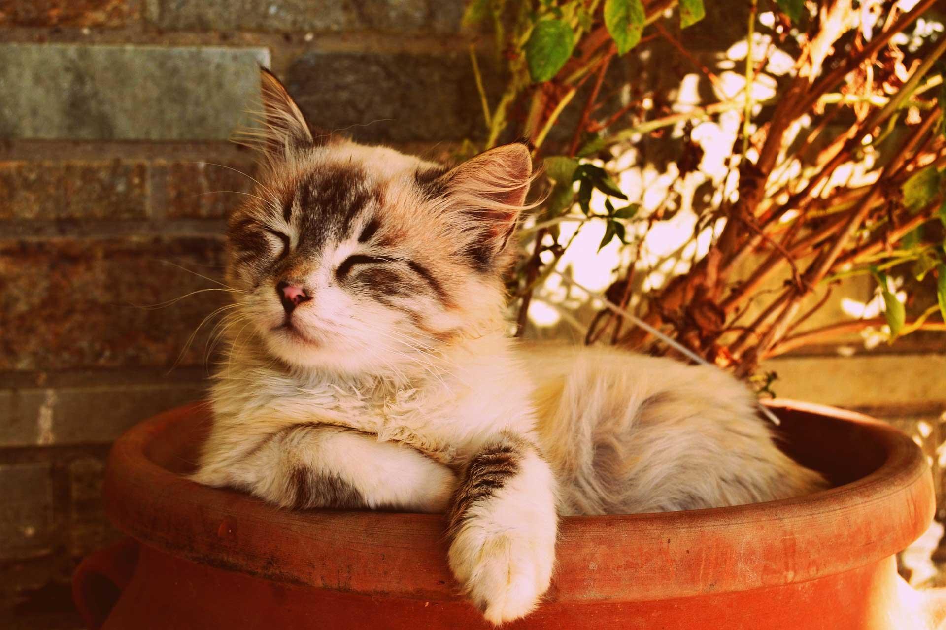 hình ảnh mèo dễ thương, cute