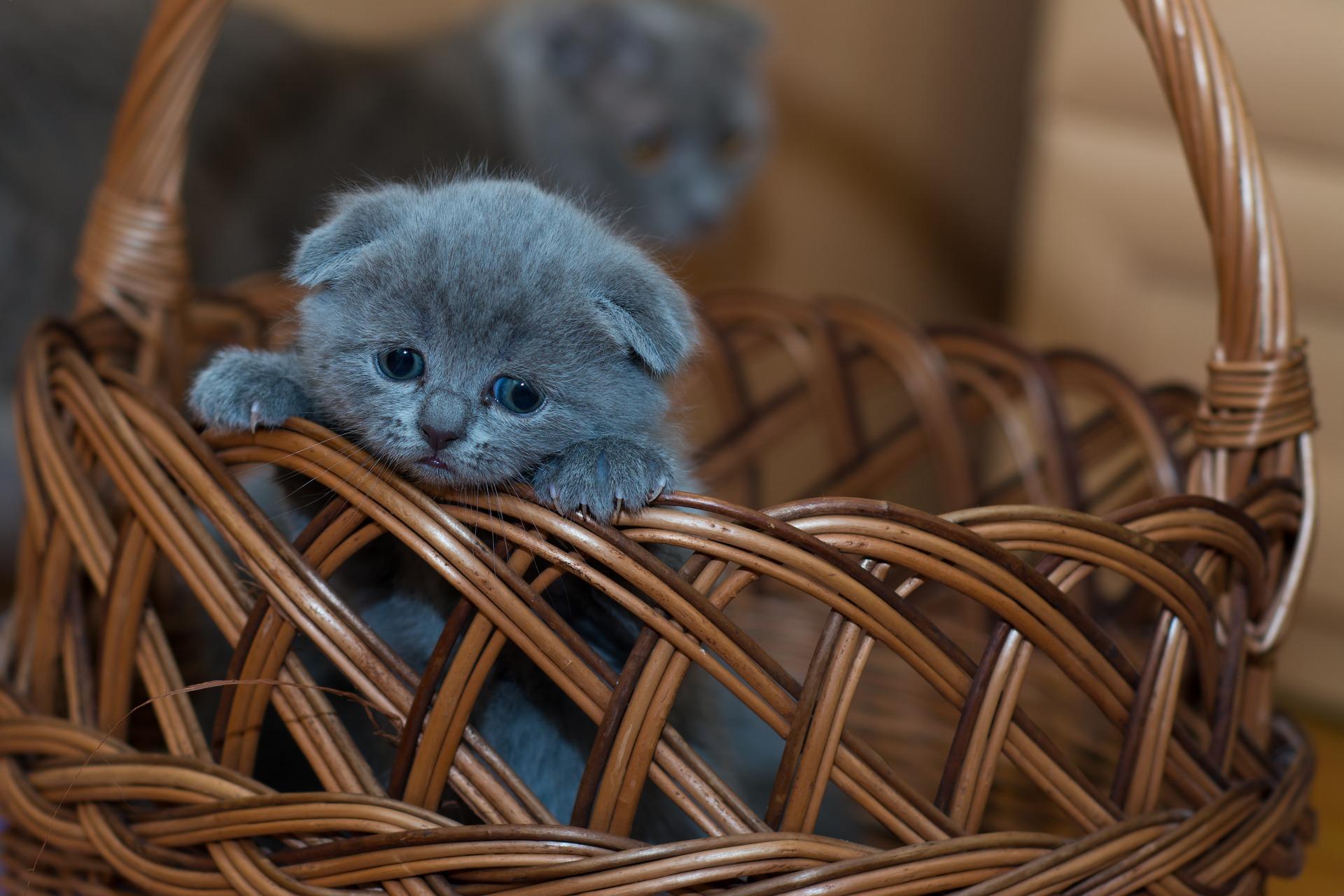 hình ảnh mèo dễ thương, ngộ nghĩnh 04