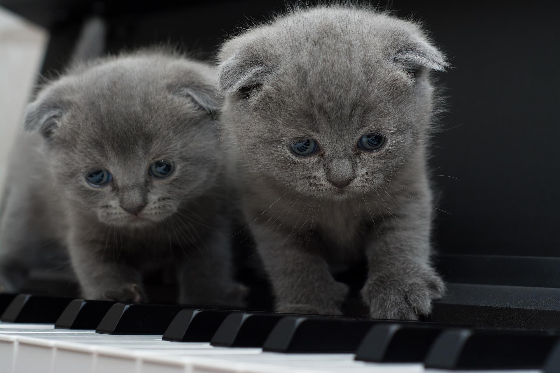 hình ảnh mèo dễ thương, ngộ nghĩnh 10
