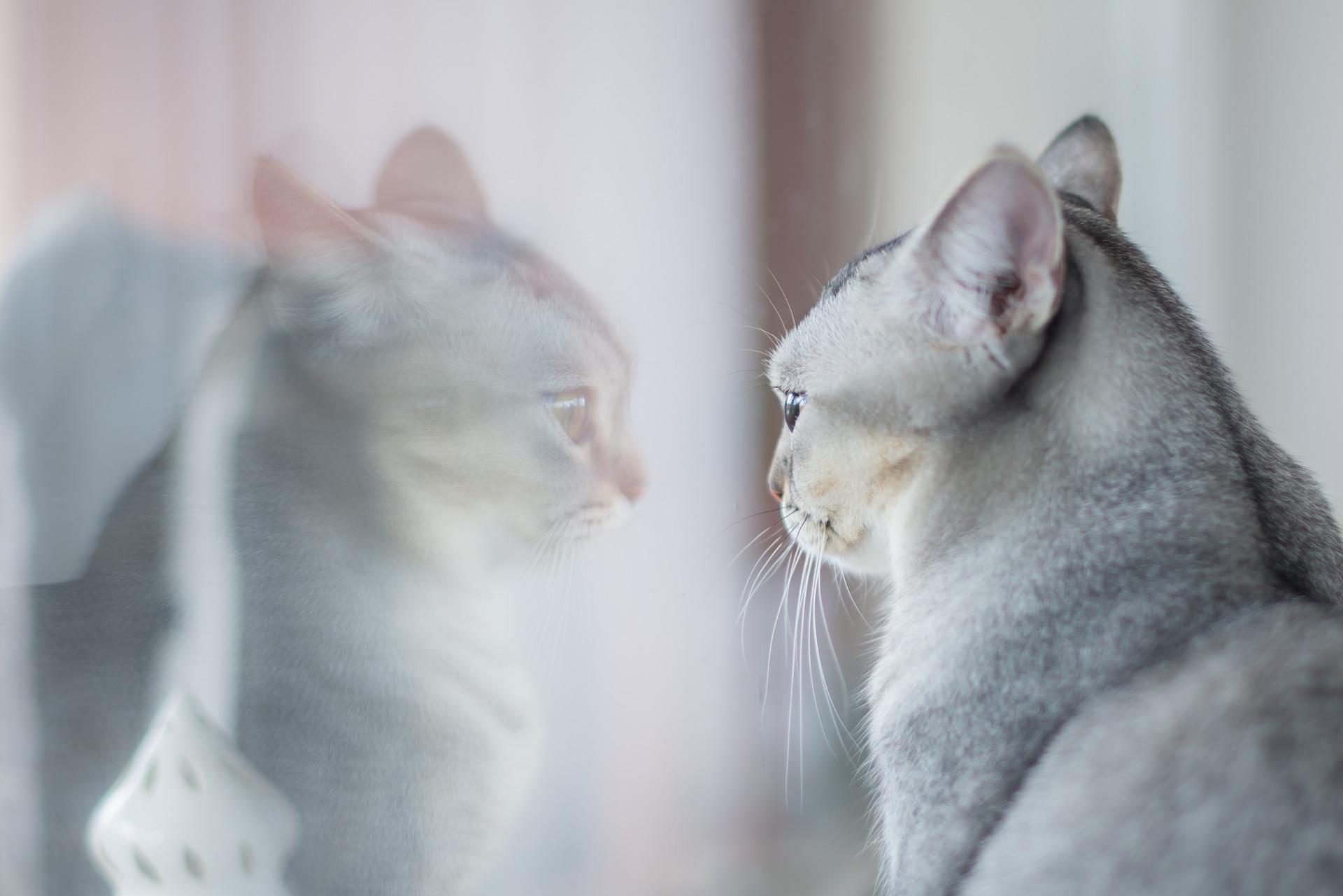 hình ảnh mèo dễ thương, ngộ nghĩnh 11